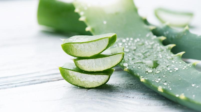 Aloes w pielęgnacji skóry wrażliwej